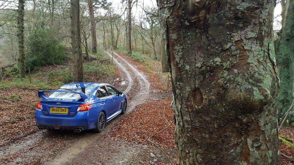 WRX STi forest